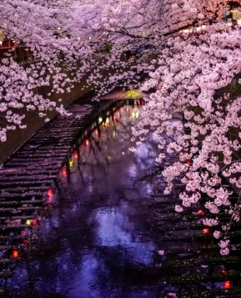 Why Hanami Is a 'Must Do' Experience in Japan